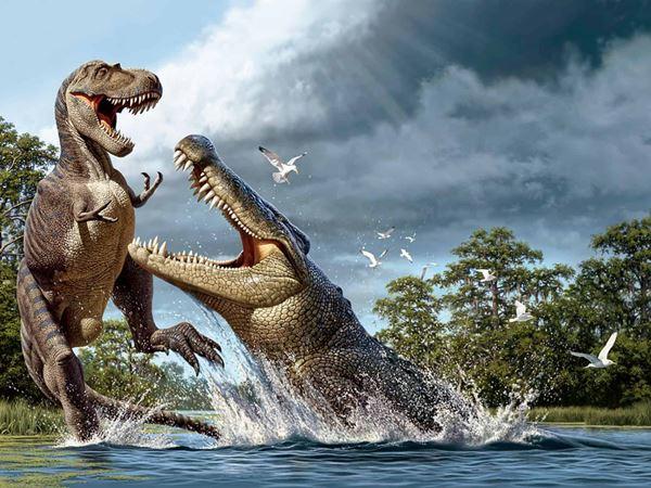 Mơ thấy cá sấu có phải điềm báo xui xẻo, đánh ngay con gì?