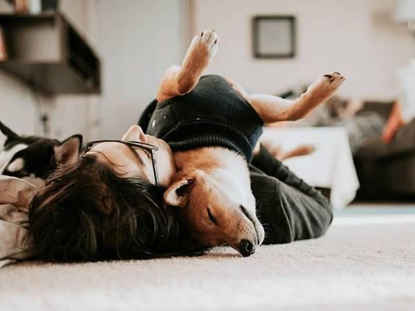 Mơ thấy chó chết báo mộng điềm gì? Đánh số mấy thắng lớn?