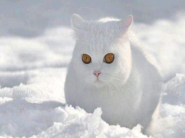 Nằm mơ thấy mèo trắng đánh con gì ăn chắc, có điềm báo gì